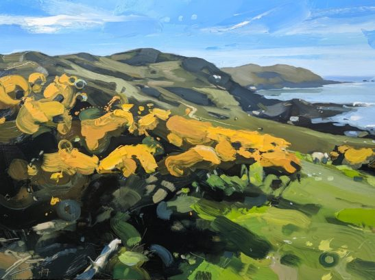 Gorse on Bull Point 46 x 61 cm oil on board