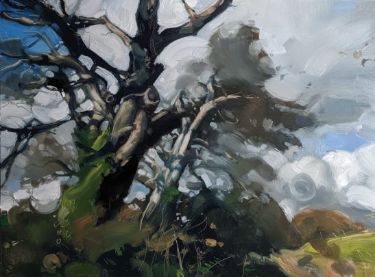 Light on a Hedge at Arlington 46 x 61 cm oil on board